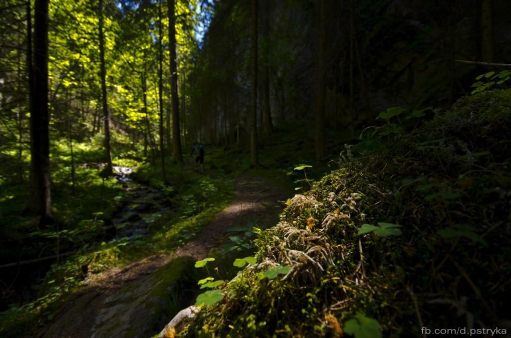 Zielony szlak z Doliny Demanovskiej