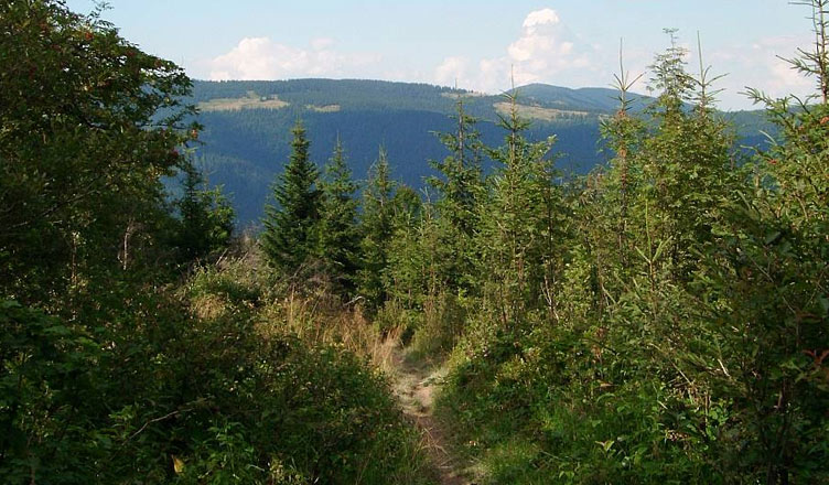 Szlak Graniczny na odcinku Krawców Wierch - Przełęcz Bory Orawskie