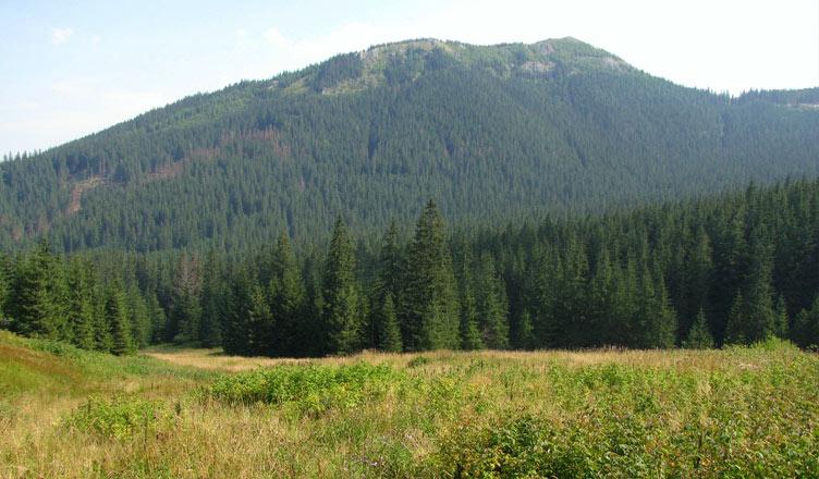 Kopieniec z Doliny Olczyskiej, fot. ŁukaszWu / Wikimedia Commons