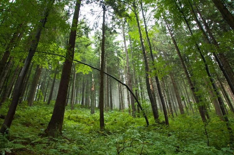Otoczenie zielonego szlaku na Rysiankę. Po deszczu - spektakularne!